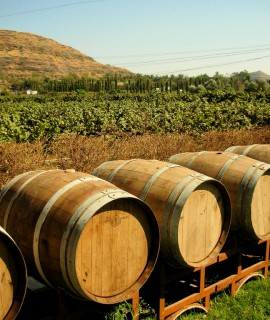 Barrels_outside_Chateau_Indage_Vineyards,_Narayangaon_-_Pune,_Mah.