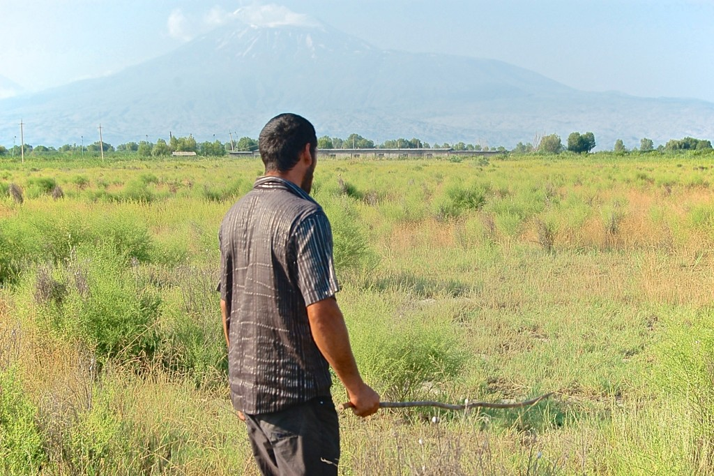 Yezidi cattle herder in Armenia, facing Mt. Ararat